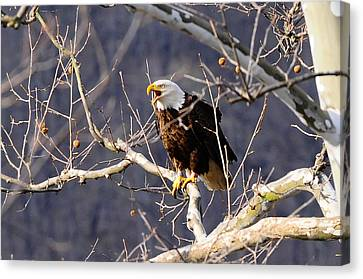 Canvas Print featuring the photograph Calling For His Mate by Randall Branham