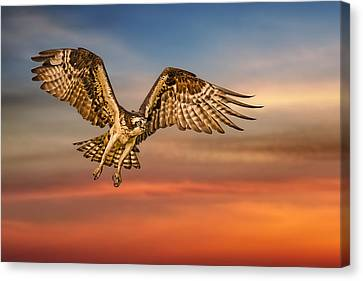 Calling It A Day Canvas Print by Susan Candelario