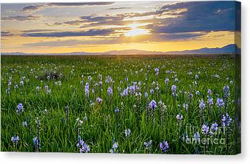 Camas Fields Canvas Print by Idaho Scenic Images Linda Lantzy