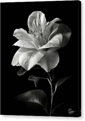 Camellia Canvas Print - Camellia In Black And White by Endre Balogh