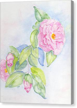 Camellias Pink Canvas Print