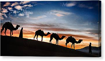 Camels - 2 Canvas Print by Okan YILMAZ