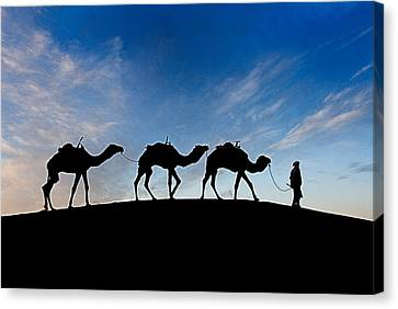 Camels - 3 Canvas Print by Okan YILMAZ