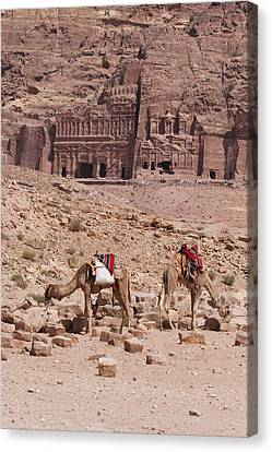 Camels In Front Of The Royal Tombs Petra Canvas Print