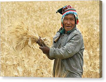 campesino cutting wheat. Republic of Bolivia. Canvas Print by Eric Bauer