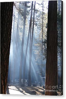 Campfire Smoke Through The Trees Canvas Print