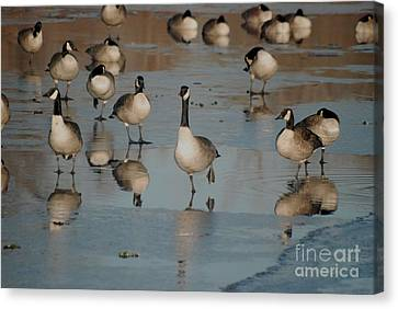 Canvas Print featuring the photograph Canada Geese by Mark McReynolds