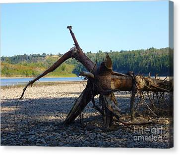 Canvas Print featuring the photograph Canadian Driftwood by Jim Sauchyn
