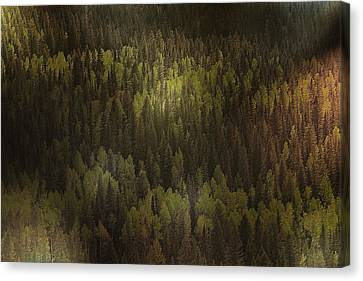 Lush Canvas Print - Canadian Forest - The Woods Are Lovely Dark And Deep by Christine Till