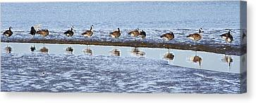 Canadian Geese Line Up Canvas Print by Mary Gaines