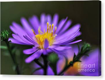Candles On A Daisy Canvas Print by Kaye Menner