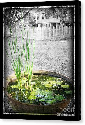 Canvas Print featuring the photograph Cane Pot And Water Lily by Jeanne  Woods