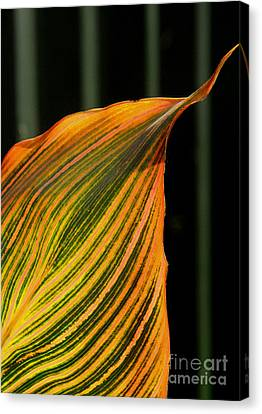 Canvas Print featuring the photograph Canna Leaf by Nareeta Martin