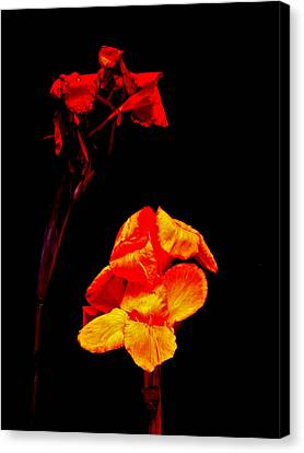 Canna Lilies On Black Canvas Print by Mother Nature