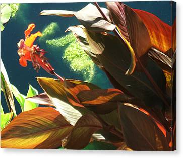 Canna Lily And Water In San Angelo Civic League Park Canvas Print by Louis Nugent