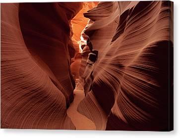 Canyon Contours Canvas Print by David Hogan