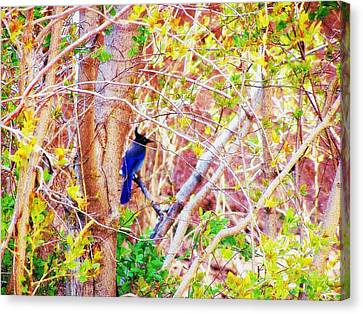 Canvas Print featuring the photograph Canyon Jay  by Clarice  Lakota