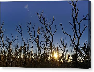 Cape Cod Marsh At Sunset Canvas Print by Marianne Campolongo