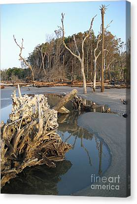 Driftwood Canvas Print - Capers Island 2007 by Judee Stalmack