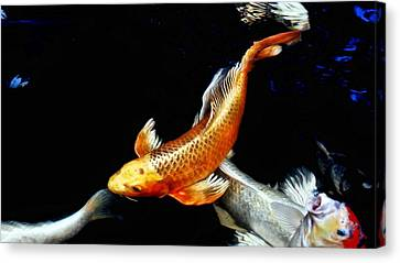 Captain Koi Canvas Print by Don Mann