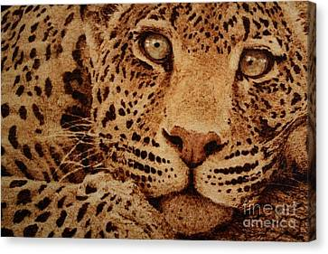 Captivated Canvas Print by Steven Hawkes