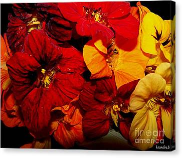 Canvas Print featuring the photograph Capucines by Sylvie Leandre
