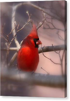 Cardinal - Unafraid Canvas Print