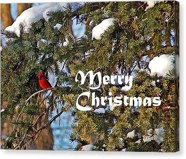 Cardinal Christmas Card Canvas Print by Aimee L Maher Photography and Art Visit ALMGallerydotcom