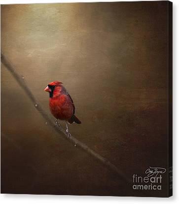 Cardinal Old Master - Artist Cris Hayes Canvas Print