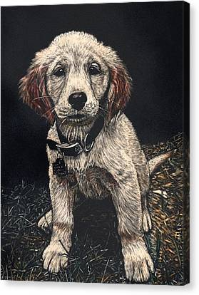 Carmen The Puppy Canvas Print by Robert Goudreau