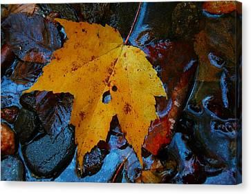 Carolina Blue Reflections Canvas Print by Christine Annas