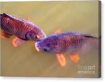Carp Duo Watercolor Canvas Print by Nancy Mueller