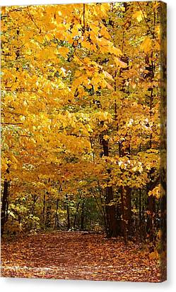 Lowden State Park Canvas Print - Carpet Of Leaves Marks The Path by Bruce Bley