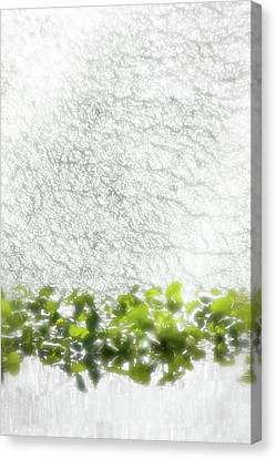 Canvas Print featuring the photograph Cascade by Richard Piper