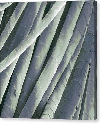 Cashmere Wool Fibres, Sem Canvas Print by Steve Gschmeissner
