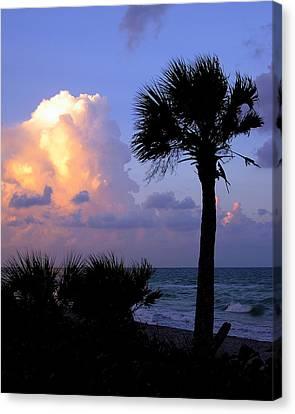 Casperson Beach Sunrise With Palm Canvas Print