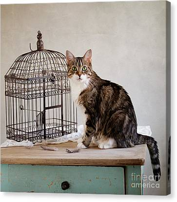 Cat And Bird Canvas Print by Nailia Schwarz