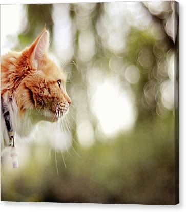 Cat And Bokeh Background Canvas Print by Maria Kallin