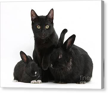 Cat And Rabbits Canvas Print by Mark Taylor