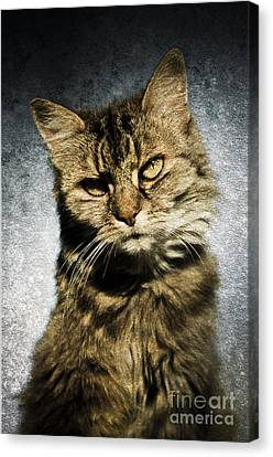 Cat Asks Question Canvas Print by David Lade
