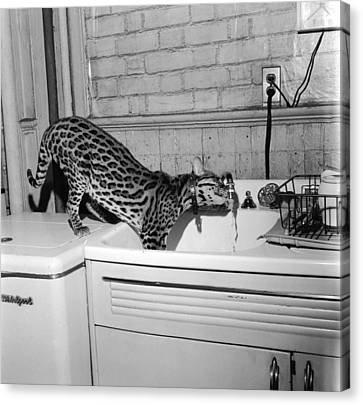 Cat At The Tap Canvas Print by Sherman