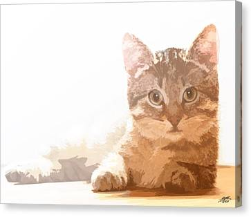 Cat Basking In Sunshine Canvas Print by Steve Huang