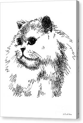 Cat Drawings 4 Canvas Print by Gordon Punt