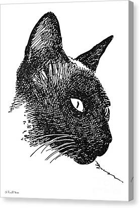 Cat Drawings 5 Canvas Print by Gordon Punt
