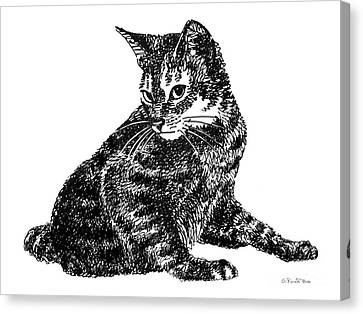Cat Drawings 6 Canvas Print by Gordon Punt