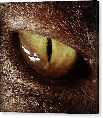 Cat Eye Canvas Print by Cameron Bentley