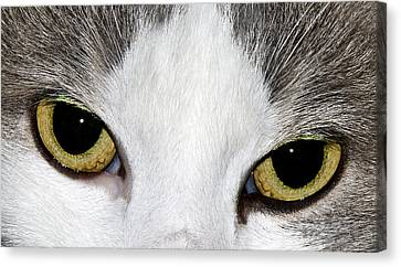 Canvas Print featuring the photograph Cat Eyes by David Lester