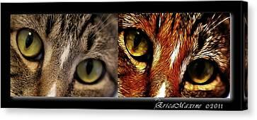 Cat Eyes Canvas Print by EricaMaxine  Price