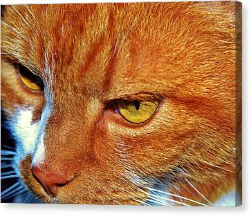 Cat Eyes Canvas Print by Werner Lehmann