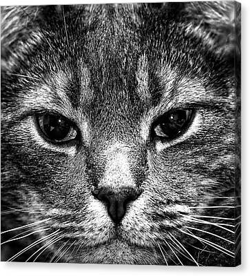 Cat Face In Black And White Canvas Print